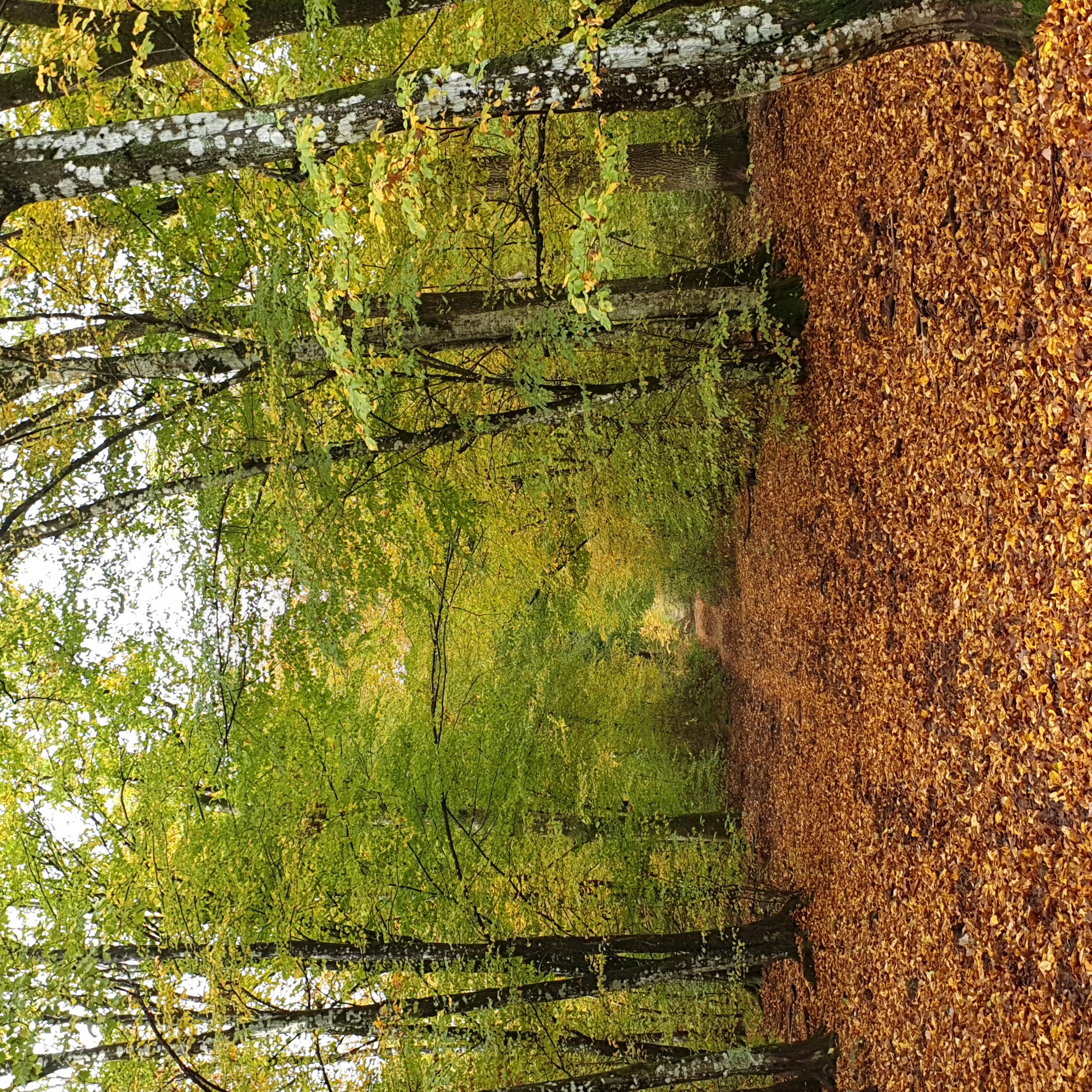 Une réflexologie de l'automne